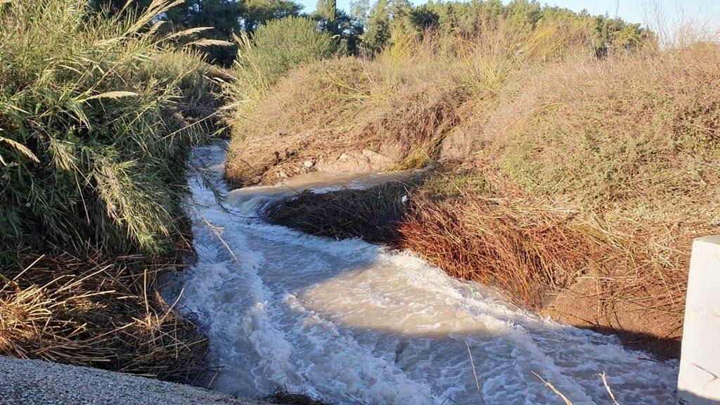 חורף בנחלים - זהר בדשא